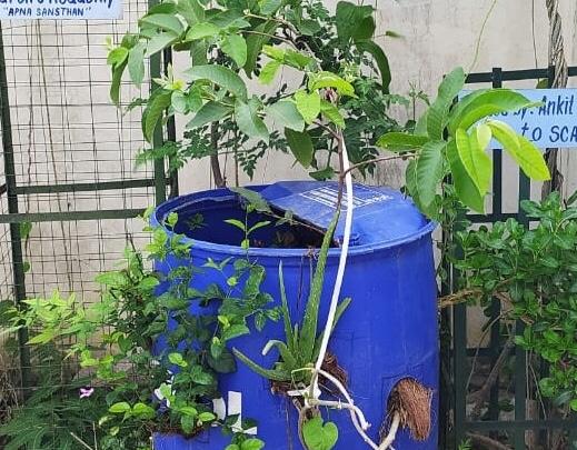 घरों में बागवानी, रसोई की बगिया और पॉलिथीन से बनी ईको-ब्रिक्स के माध्यम से सहेज रहे पर्यावरण; कारगर साबित हो रहे अपना संस्थान के प्रयास|दौसा,Dausa - Dainik Bhaskar