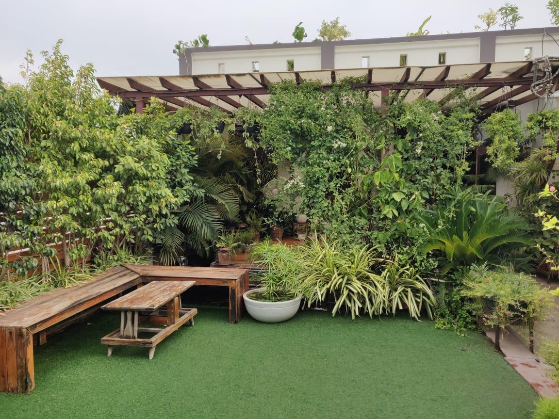 टेरेस गार्डन में है लगभग 700 से ज्यादा पौधे