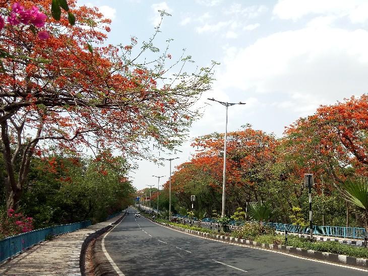 1 साल में काटे 2 हजार पेड़, जिंदा रहते तो रोज 8000 सिलेंडर के बराबर देते ऑक्सीजन भोपाल,Bhopal - Dainik Bhaskar