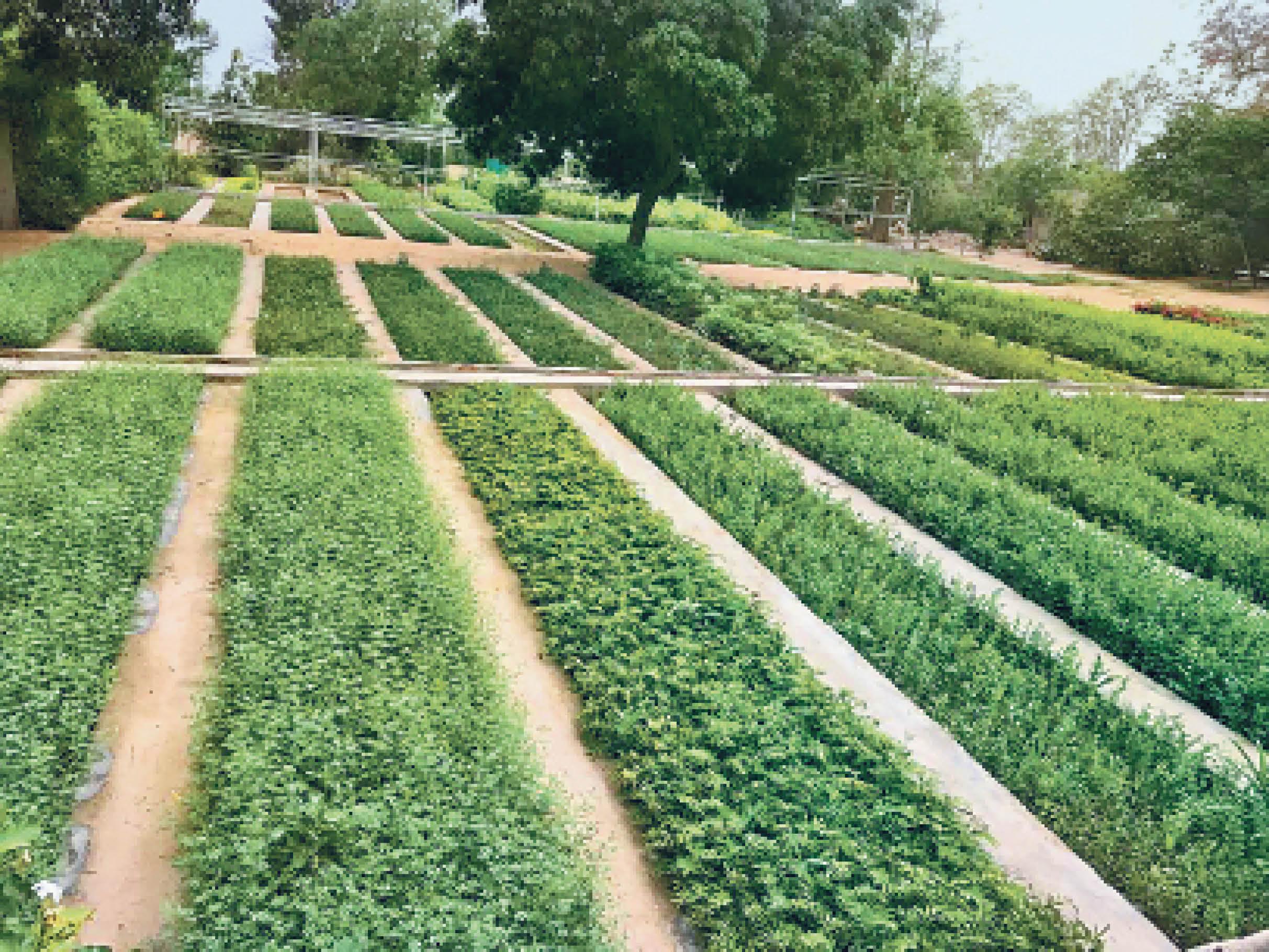 फोटो वन विभाग की बिरधवाल रेंज की है। यहां एक लाख पौधे तैयार हो रहे हैं। जिले में ऐसी 22 नर्सरी में 19 लाख पौधे लगाए गए हैं। - Dainik Bhaskar