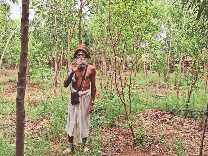 बाबा नानकदास ने 1100 पौधे लगाकर पहाड़ी को हरियाली से आच्छादित कर दिया। - Dainik Bhaskar