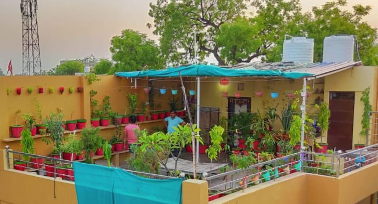 4 साल पहले 20 पौधे लगाकर शुरुआत की, आज पूरे छत पर हरियाली; पड़ोस भी महक रहा गुलाब और मोगरा की महक से|मुरैना,Morena - Dainik Bhaskar