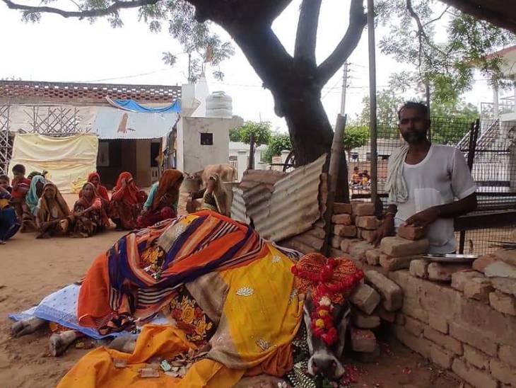 इटावा में 18 साल से गांव में रहने वाली गाय का निधन, महिलाओं ने चढ़ाई साड़ियां, हिंदू रीति से अंतिम संस्कार, तेरहवीं के रूप में होगा भंडारा कानपुर,Kanpur - Dainik Bhaskar