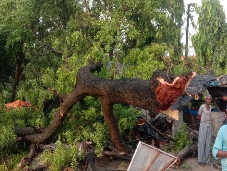 नीम व बेर का पेड़ गिरने से दो की मौत, चार घायल, अलग-अलग जगहों पर हुए हादसे लखनऊ,Lucknow - Dainik Bhaskar