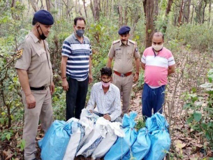 पकड़े गए गांजे के पार्सल और आरोपी नशा तस्कर। - Dainik Bhaskar