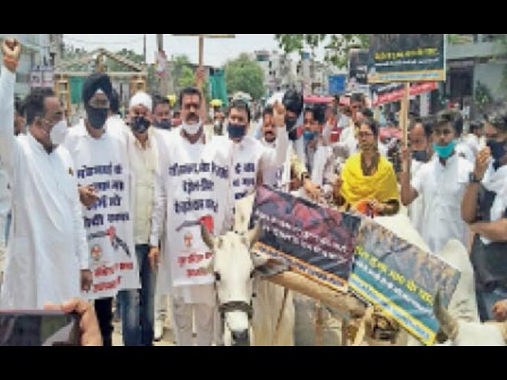 कार्यकर्ताओं ने चलाई बैलगाड़ी, वाहन चालकों को पहनाई फूलमाला भोपाल,Bhopal - Dainik Bhaskar