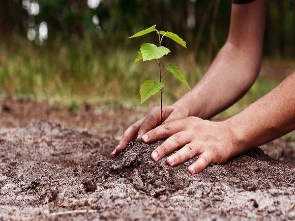 1076 वर्गफीट से छोटे प्लाॅट वालों को घर बनाने से पहले बगीचे व सड़क किनारे लगाना होंगे पौधे भोपाल,Bhopal - Dainik Bhaskar