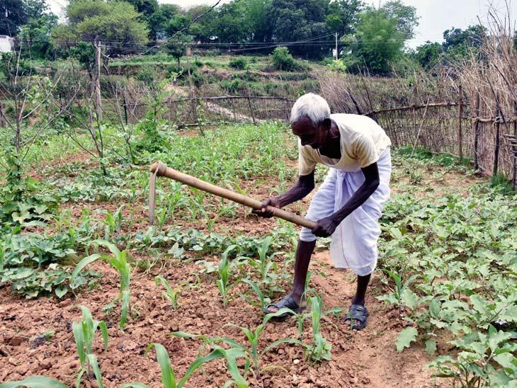 बिरसा मुंडा के पोते सुखराम मुंडा 82 साल की उम्र में भी खेतों में कुदाल चलाने के लिए मजबूर हैं।