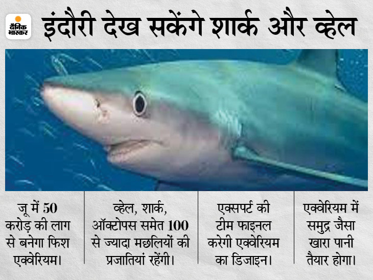 इंदौर में तैयार किया जाएगा 50 करोड़ रुपए का एक्वेरियम, 100 से ज्यादा प्रजातियों की डेढ़ से दो हजार मछलियां रहेंगी|इंदौर,Indore - Dainik Bhaskar