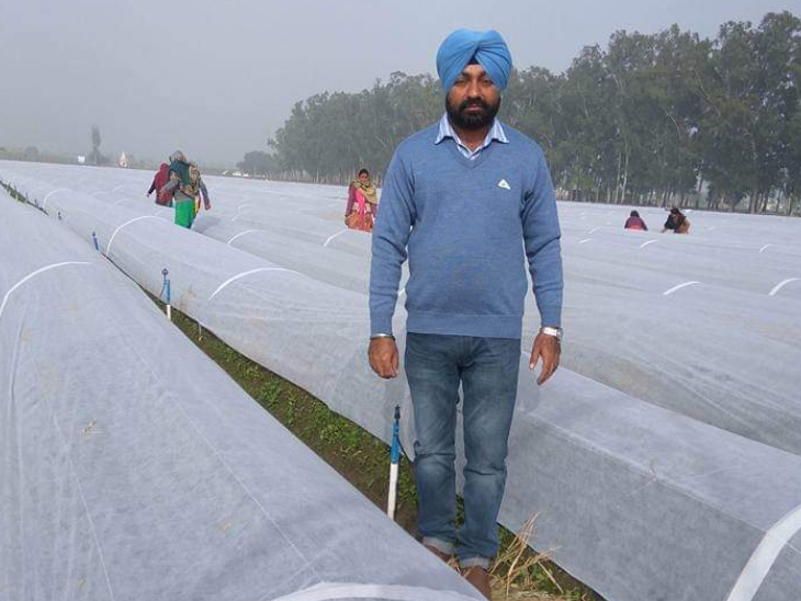 अपनी नर्सरी के बीच खड़े हरबीर सिंह। बीजों को बारिश या मौसम की मार से बचाने के लिए वे अपने पौधों को इसी तरह कवर करते हैं।