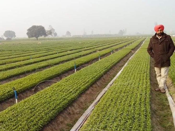 45 साल के हरबीर सिंह ने पॉलिटिकल सांइस से मास्टर्स की डिग्री हासिल की है। करीब 20 साल से वे खेती कर रहे हैं।