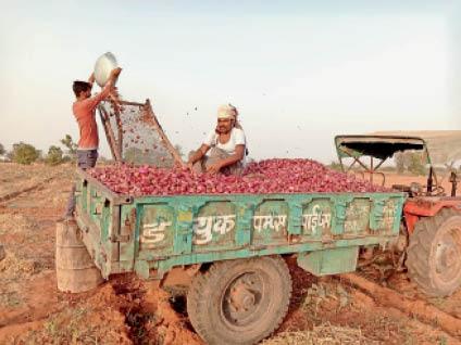 कोरोना के बाद अब प्याज के भाव भी डराएंगे, इस बार उत्पादन कम और भावों में लगातार तेजी, स्टॉक करने में लगे हैं व्यापारी जोधपुर,Jodhpur - Dainik Bhaskar