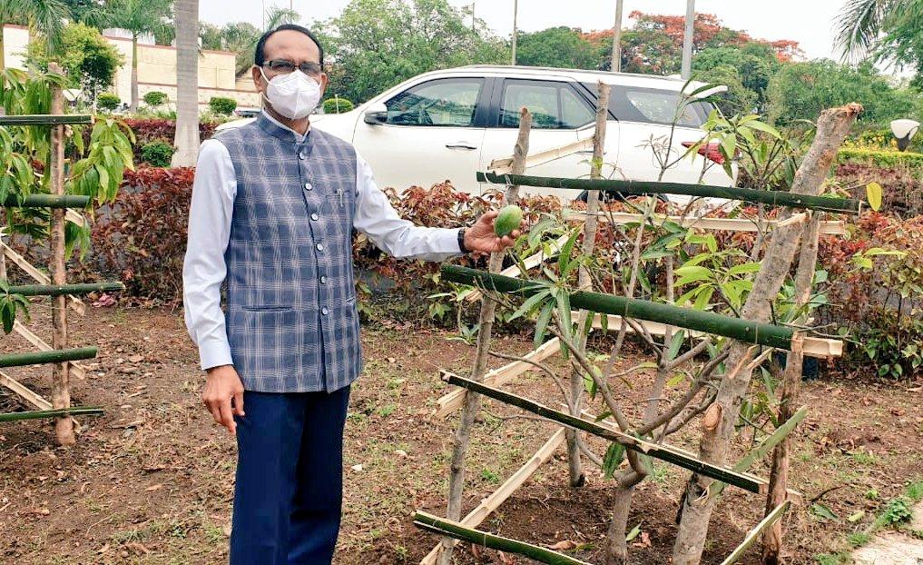 पत्नी साधना सिंह के बर्थ डे पर हिल स्टेशन पहुंचे; 2016 में रोपे आम के पौधे का फोटो शेयर कर लिखा- शायद इसे कहते हैं मेहनत का फल|मध्य प्रदेश,Madhya Pradesh - Dainik Bhaskar