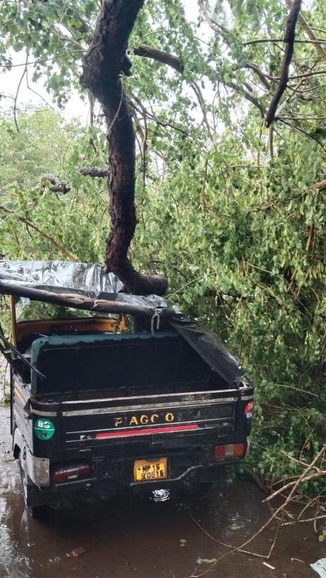 बारिश के साथ आंधी से ऑटो रिक्शा पर गिरा पेड़।