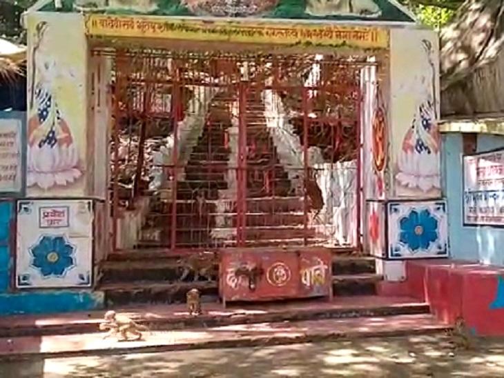 कोरोना संक्रमण के दौरान मंदिर बंद हुआ तो बंदर भी भूख से परेशान हो गए। सारी-सारी रात चिल्लाते रहते।