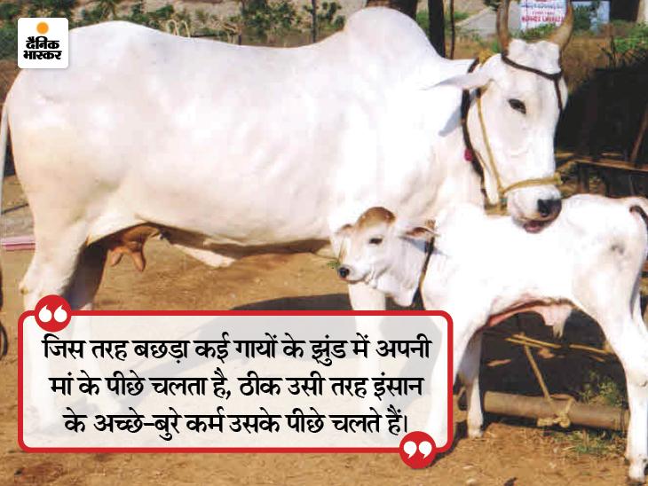 सफलता की खुशियां मनाना अच्छी बात है, लेकिन असफलताओं से सीख लेना ज्यादा महत्वपूर्ण है धर्म,Dharm - Dainik Bhaskar