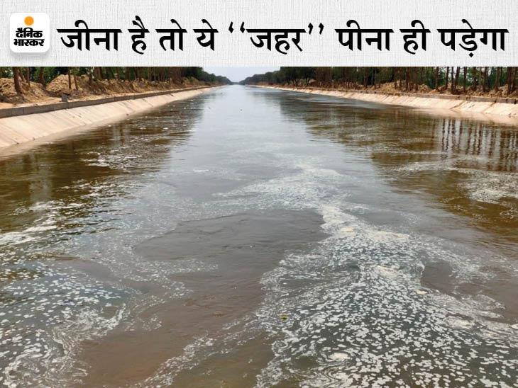 पंजाब ने नहरों में छोड़ा केमिकल वाला पानी;कैंसर, अलजाइमर और किडनी संबंधी गंभीर बीमारियां होने का खतरा बढ़ा|श्रीगंंगानगर,Sriganganagar - Dainik Bhaskar