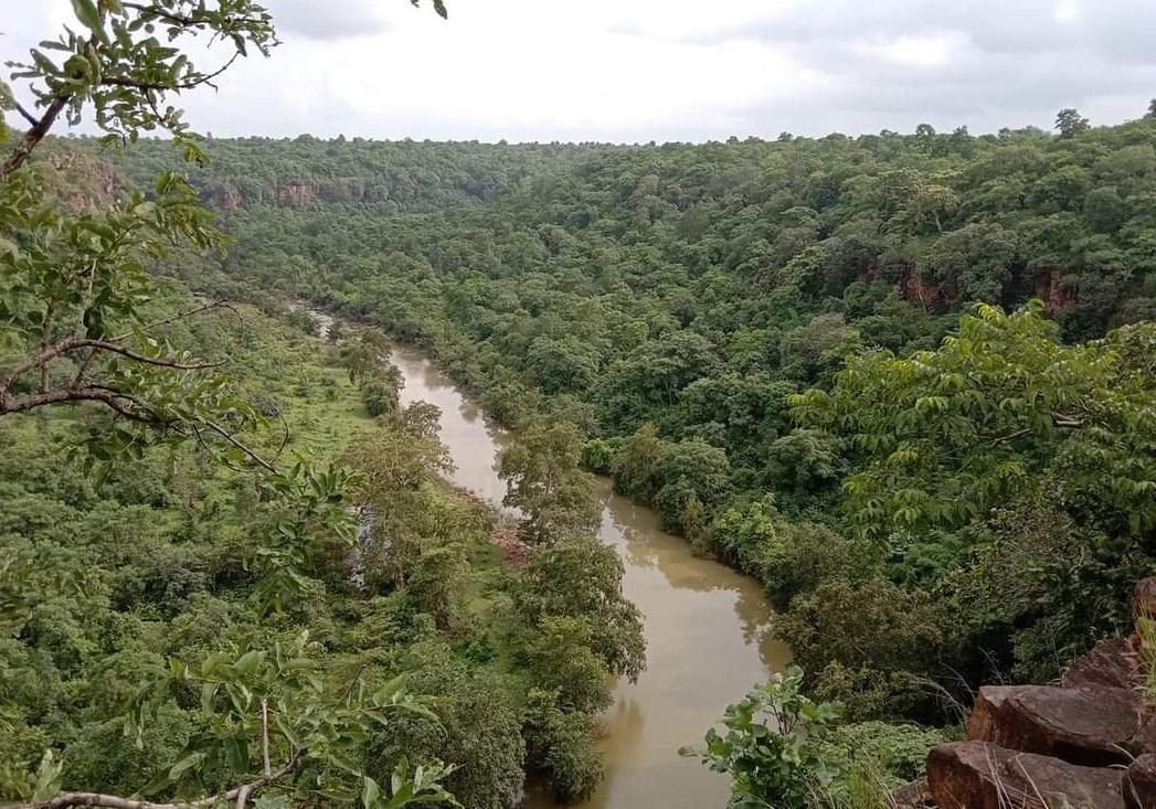 बकस्वाहा जंगल में कई औषधीय पेड़ हैं।