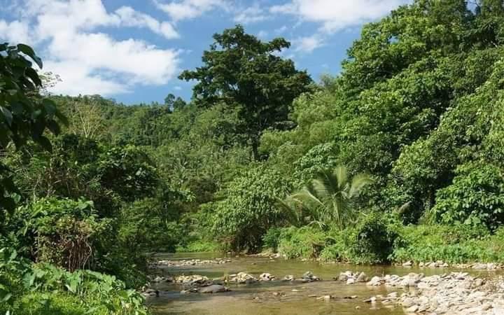 नेशनल ग्रीन ट्रिब्यूनल (NGT) में भी बकस्वाहा जंगल को बचाने के लिए जनहित याचिका दायर की गई है।