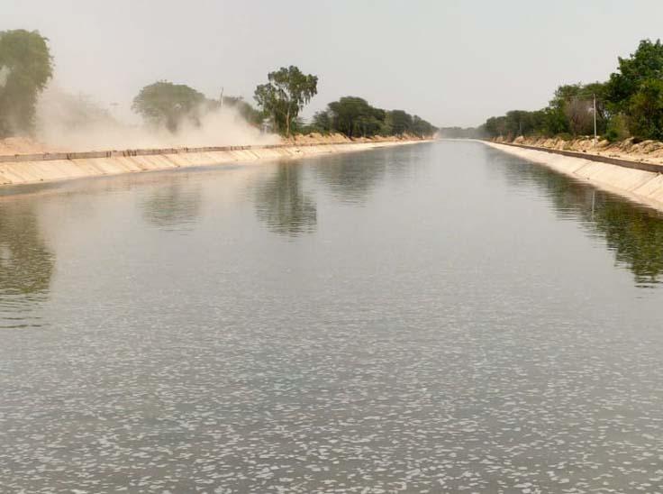 गंगानगर क्षेत्र की एक नहर की स्थिति।