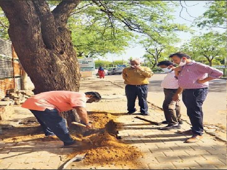 जेडीए- मानसून में पुराने पेड़ों को जीवन; फिर नए प्लांटेशन, यूडीएच- पूरे प्रदेश में पेड़ों को बचाने की गाइडलाइन बनेगी|जयपुर,Jaipur - Dainik Bhaskar