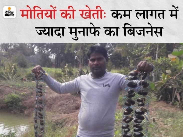 7 साल पहले दस हजार रुपए से मोतियों की खेती की शुरुआत की, आज हर सीजन में 10 लाख रुपए कमा रहे मुनाफा|DB ओरिजिनल,DB Original - Dainik Bhaskar
