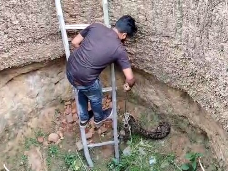 खाली कुएं में बैठे अजगर को लोगों ने पत्थरोंसे मारकर अधमरा किया, स्नेक रेस्क्यू टीम ने बचाकर जंगल में छोड़ा छत्तीसगढ़,Chhattisgarh - Dainik Bhaskar