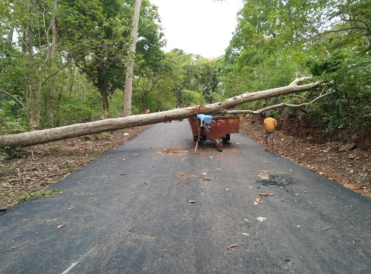 दंतेवाड़ा में हुई घटना, ट्राली में सवार होकर ग्रामीण जा रहे थे गांव अचानक आंधी से गिरा पेड़|दंतेवाड़ा,Dantewada - Dainik Bhaskar