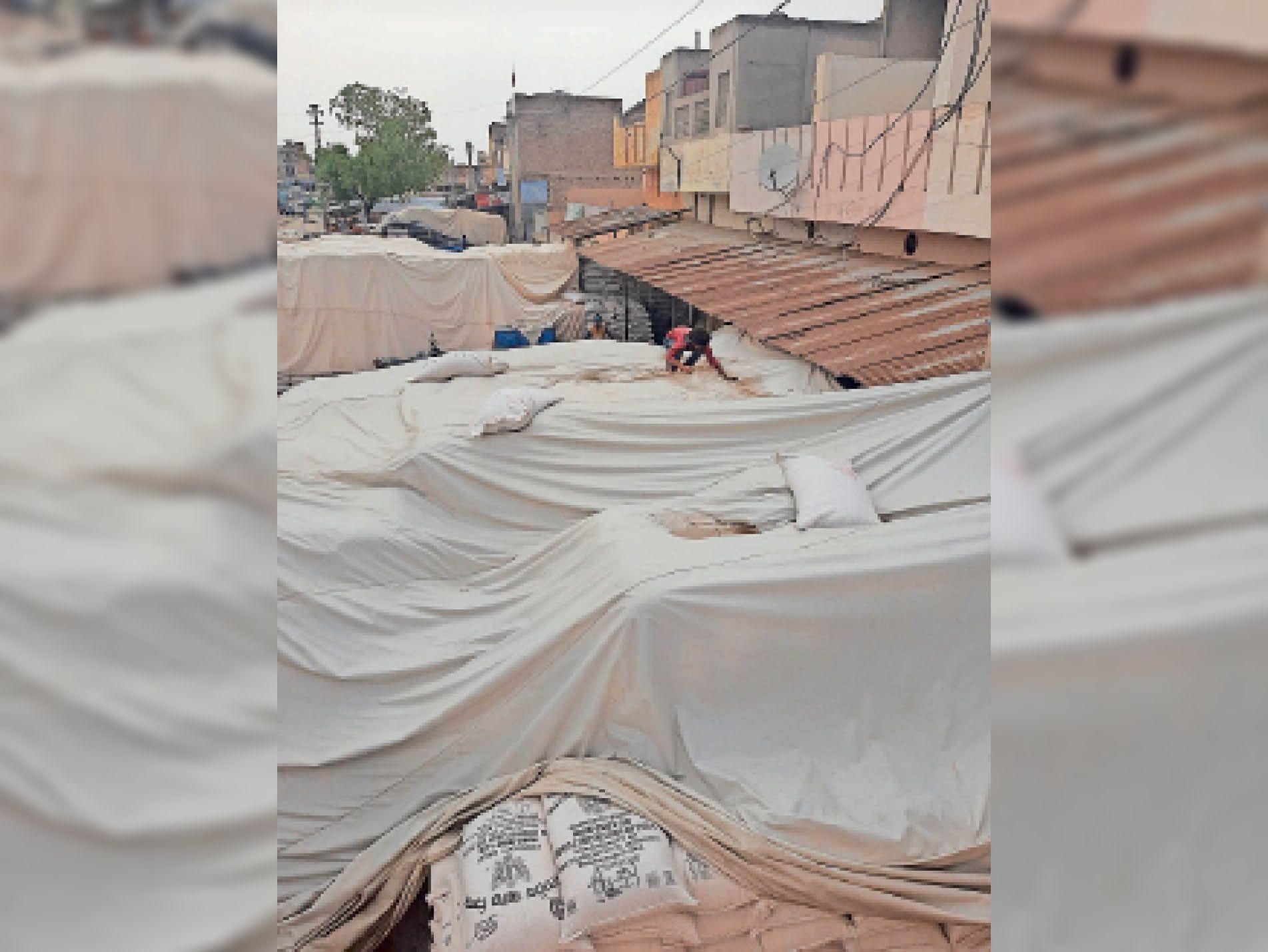 छोटे केंद्रों पर बंद करने के दिए लिखित आदेश, बड़ी मंडियों में भी बारदाने के अभाव में नहीं हो रही खरीद हनुमानगढ़,Hanumangarh - Dainik Bhaskar