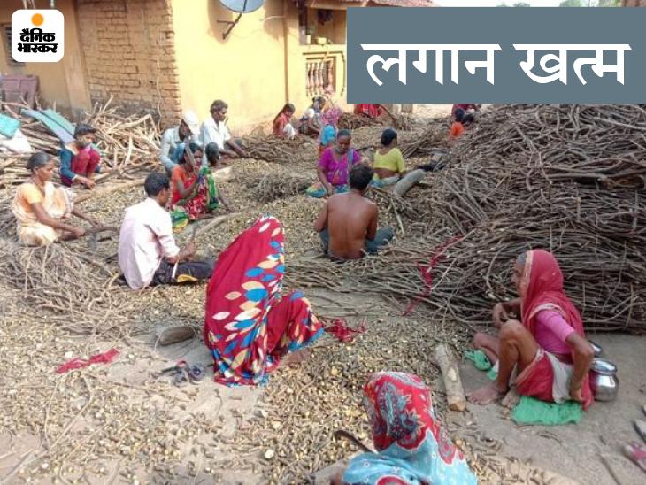 मंडी कैंपस के बाहर वन उत्पादों की बिक्री पर अब नहीं लगेगा कृषि मंडी शुल्क; सभी प्रकार के टैक्स की 40 साल पुरानी व्यवस्था खत्म|जयपुर,Jaipur - Dainik Bhaskar