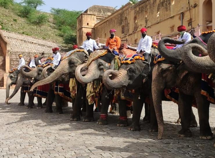 जयपुर में दो महीने बाद पर्यटन की राह खुलने पर हाथियों ने सूंड उठाकर अभिवादन किया।