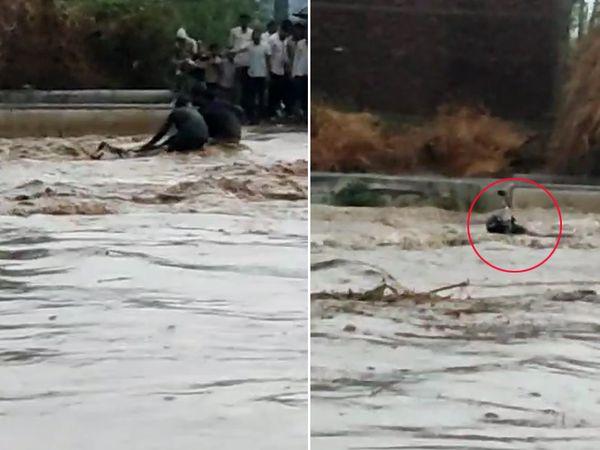 लाठी गांव की देवलियानी नदी में अचानक बाढ़ आने से पुलिया पार रहा एक बाइक सवार फंस गया। बाइक चालक की जान बच गई, लेकिन बाइक बह गई।