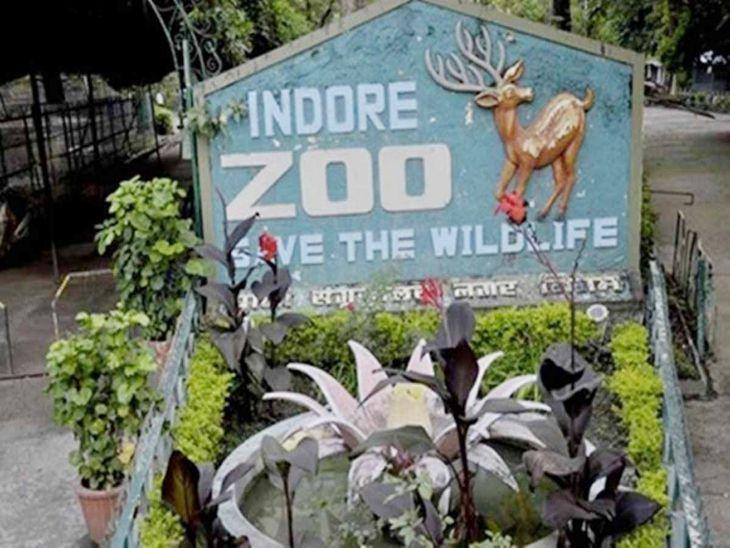 रीजनल पार्क, मेघदूत गार्डन और जू सोमवार से शनिवार तक खुलेंगे, जू में शाम 6 बजे तक दर्शक देख सकेंगे चहेते जानवर|इंदौर,Indore - Dainik Bhaskar