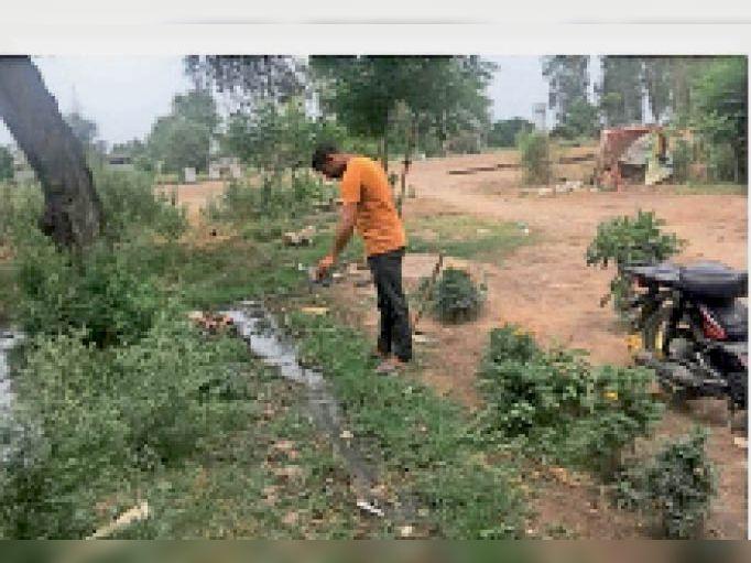 डेंगू से बचाव को लेकर जमा पानी में ईंजन में इस्तेमाल किया गया तेल डालता कर्मी। - Dainik Bhaskar