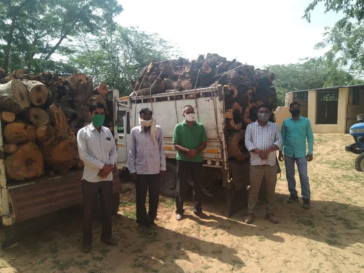वन  विभाग की ओर से जब्त की गई लक� - Dainik Bhaskar