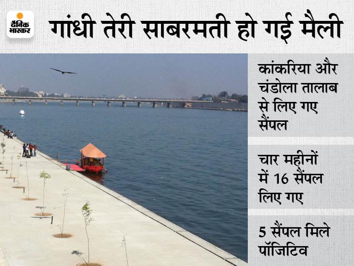 अहमदाबाद की साबरमती नदी, कांकरिया और चंडोला तालाब से मिले कोरोनावायरस, 16 में से 5 सैंपल मिले पॉजिटिव|गुजरात,Gujarat - Dainik Bhaskar