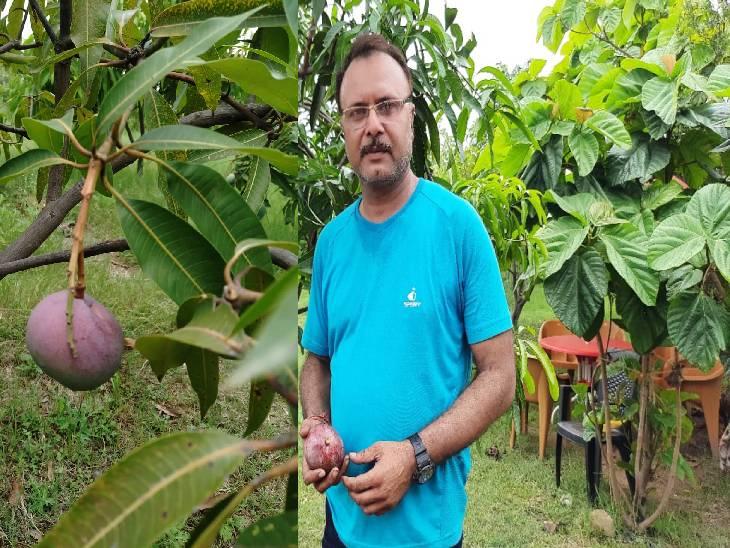 फार्मर संकल्प परिहार अपने आम के बगीचे में।