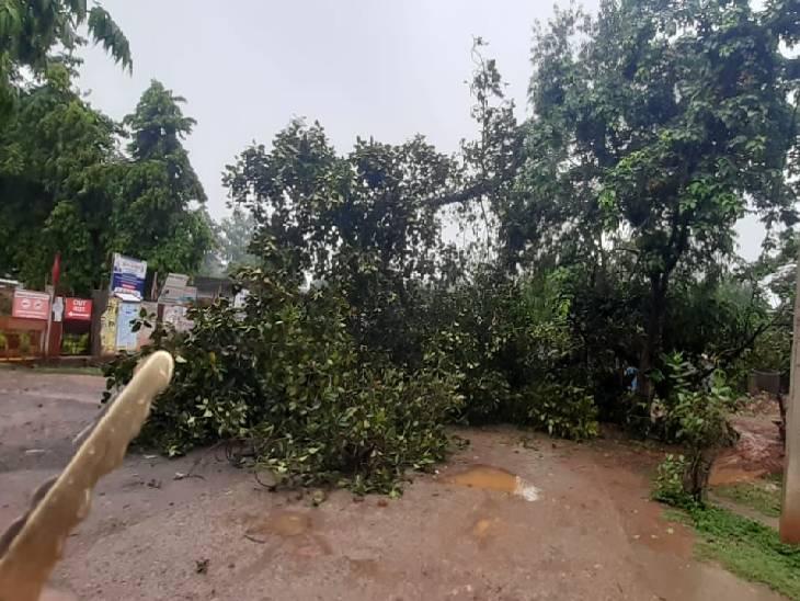सिरमौर में सड़क पर गिरा बरगद का वृक्ष।