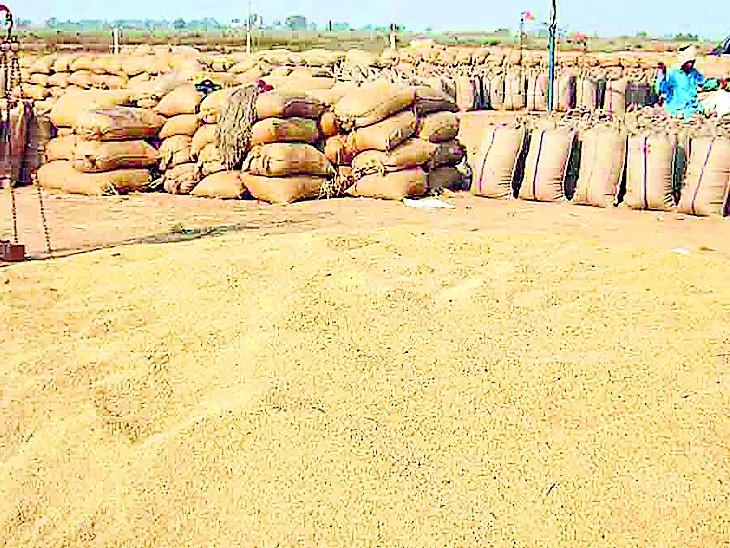 43% जमीन में खेती होती है, 92 लाख टन धान खरीदी। - Dainik Bhaskar