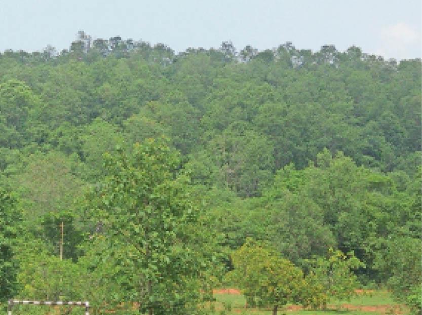 पांच लाख घने पेड़ों ने बदली मुसाबनी की फिजा; ताम्र नगरी में ताउम्र पानी की समस्या होगी दूर|घाटशिला,Ghatsila - Dainik Bhaskar