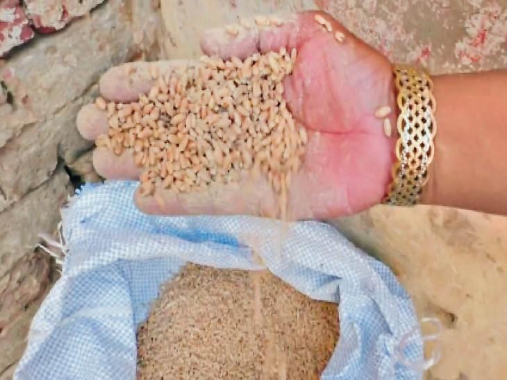 डीएफएसओ हरप्रीत सिंह ने कहा कि जो गेहूं खराब है हम उसे बदल देंगे। - Dainik Bhaskar