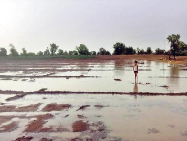 राजस्थान बज्जू. रणजीतपुरा इलाके में बारिश से खेत में पानी भर गया।