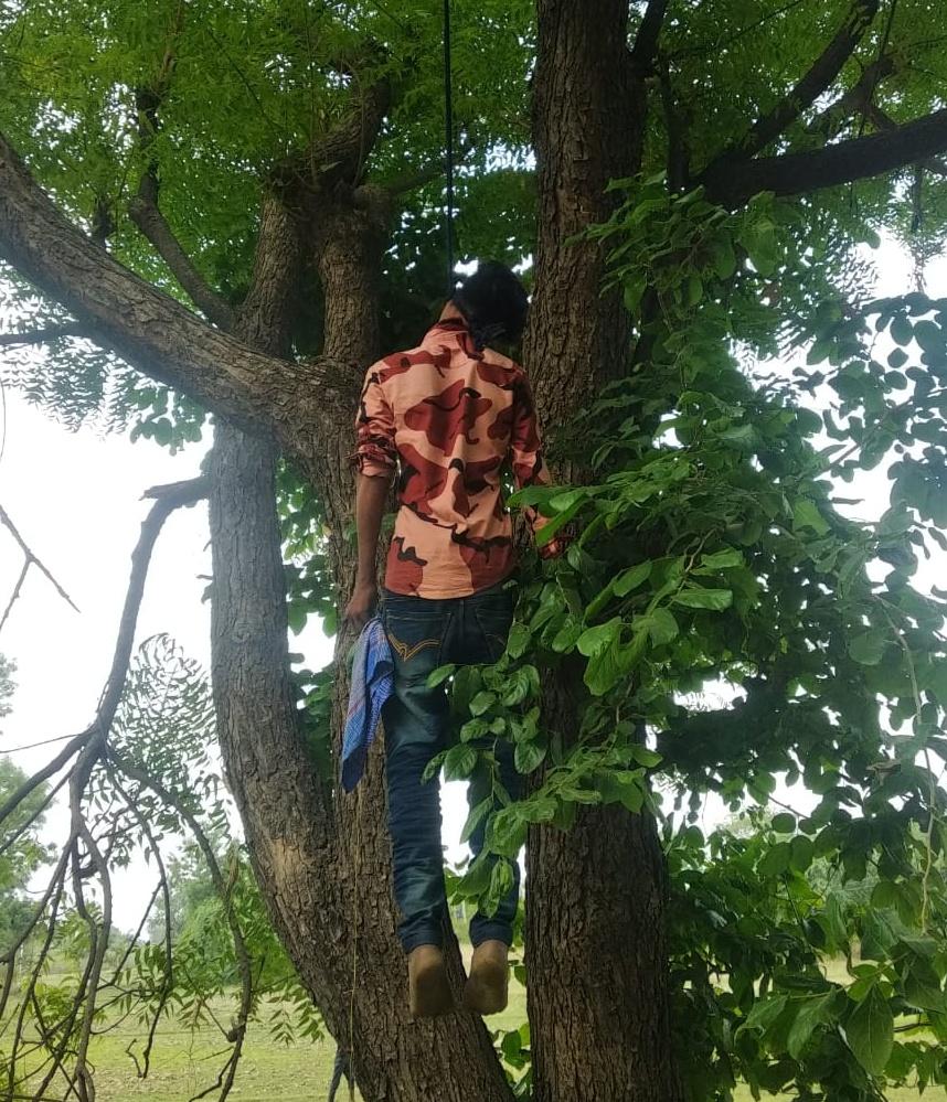 आसपुर थाना क्षेत्र के मठ झरिया में पेड़ पर झूलता  नाबालिग का शव। - Dainik Bhaskar
