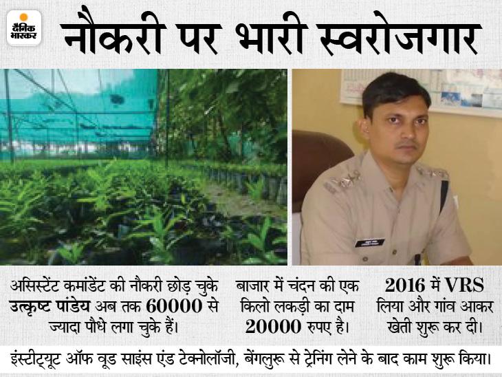 CAPF के असिस्टेंट कमांडेंट ने नौकरी छोड़ प्रतापगढ़ में चंदन की नर्सरी तैयार की, 60 हजार पौधे लगाए; इसकी एक किलो लकड़ी 20 हजार में बिकती है|प्रयागराज,Prayagraj - Dainik Bhaskar