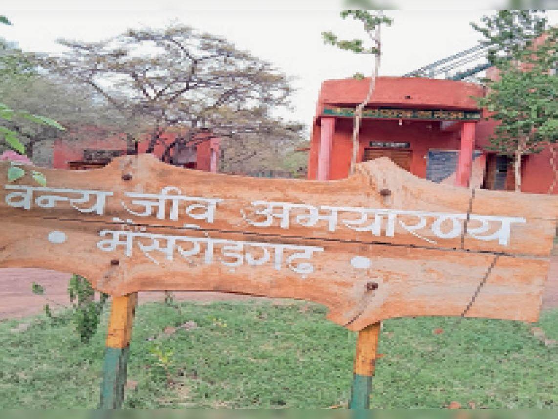रावतभाटा. भैंसरोडगढ़ सेंचूरी में नेचुरल झूले का भी पर्यटक आनंद ले सकेंगे। - Dainik Bhaskar