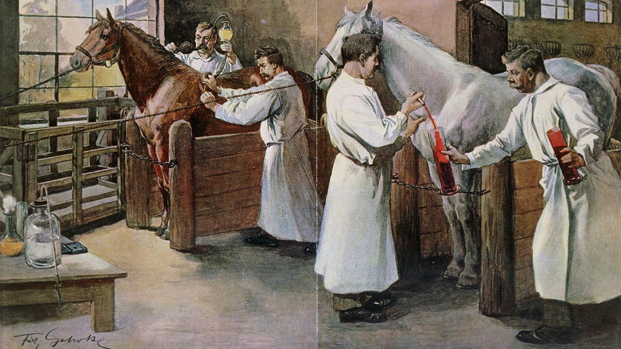 19वीं शताब्दी में डिप्थीरिया का इलाज विकसित हुआ था। घोड़ों को इंफेक्ट करते थे। जब उनका शरीर एंटीबॉडी बनाता था तो उसका प्रोडक्शन बढ़ाया जाता था। तस्वीरः जीन-लूप चार्मेट/साइंस सोर्स
