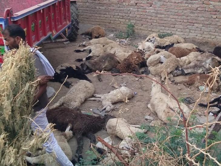 पशु चिकित्सकों की टीम ने मौके से विसरा सैम्पल लिया।पोस्टमार्टम रिपोर्ट के बाद ही भेड़ों की मौत का कारण स्पस्ट हो सकेगा।