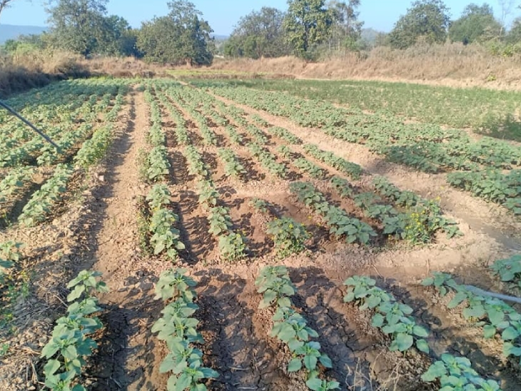 ओडिशा के 6 जिलों में विशाल के फार्म हैं। वहां वे किसानों और स्टूडेंट्स को फ्री ट्रेनिंग भी देते हैं।