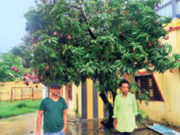 ताईयो नो तामागो आम की प्रजाति का पेड़, विदेशी ने दिया था तोहफा - Dainik Bhaskar