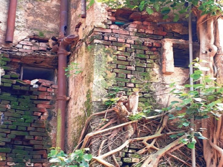 आवास बोर्ड की जर्जर बिल्डिंग की दीवार पर जमा पीपल। - Dainik Bhaskar